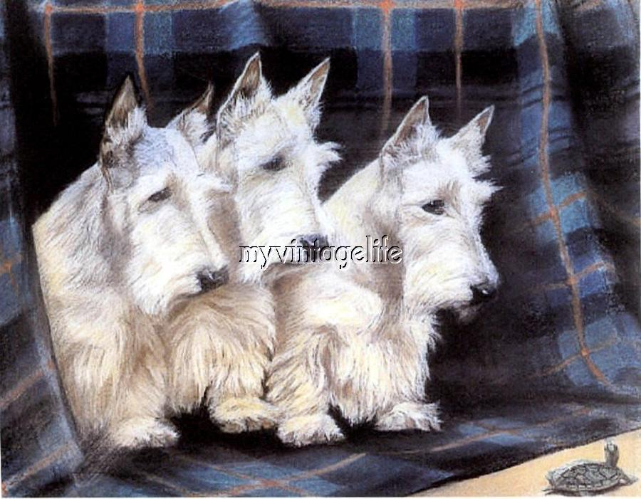Pet Show Scottish Terriers Scotties Quilting Fabric Block Vintage theme