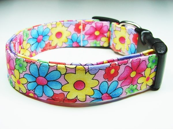 Charming Pink Blue Yellow Purple Green Amp Yellow Daisies