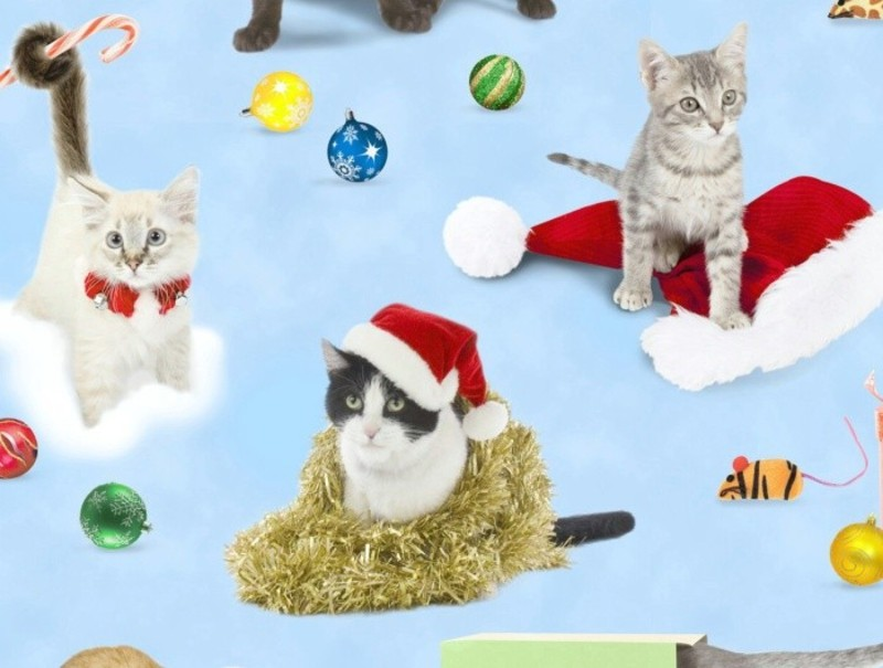 Elizabeth/'s Studio Holiday Friends Cats /& Kittens Novelty Cotton Fabric BTY